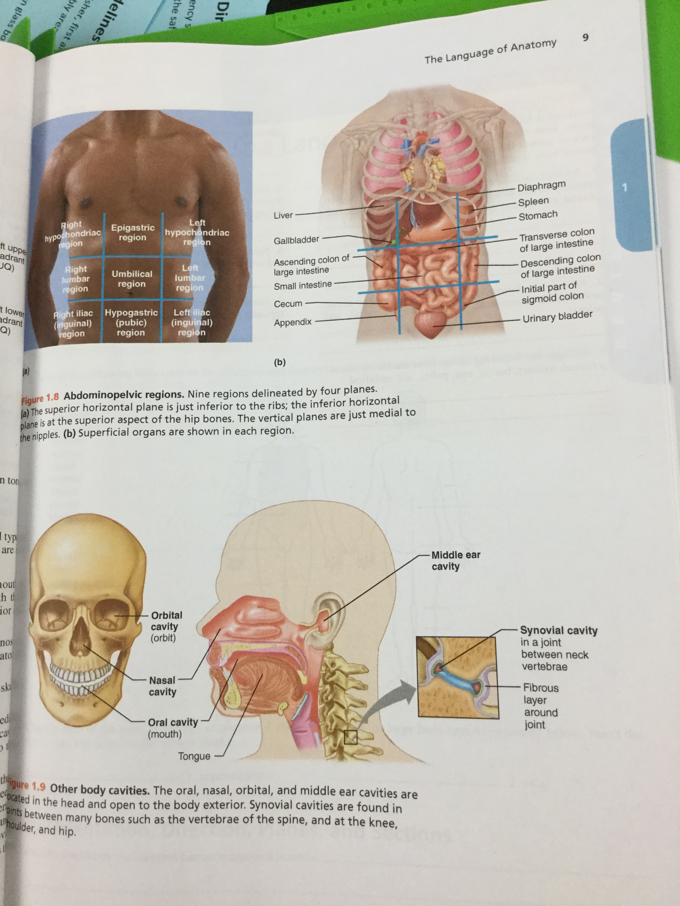 Terminology and Organ Systems – Kluthe Biology